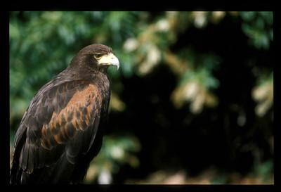 Bird, Scotland.