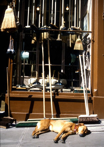 Broom shop, Edinburgh, Scotland.