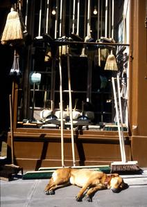 Broom shop, Edinburgh, Scotland.
