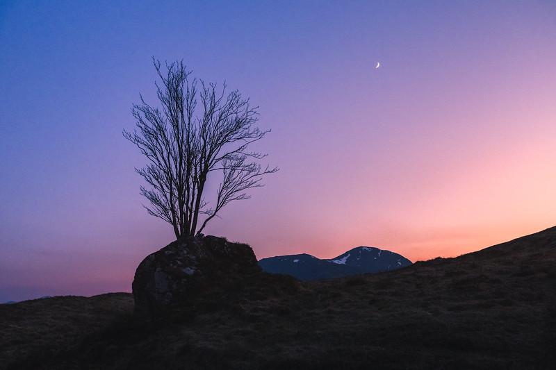 Lone Tree in Glencoe