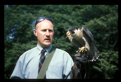 Bird and trainer, Scotland.