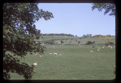 Pasture, Scotland.