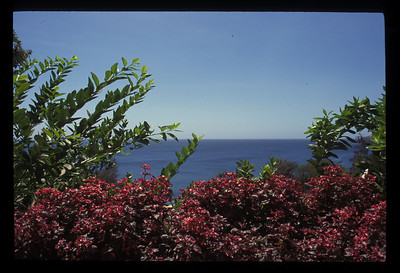 Foliage at Africa's westernmost point, Dakar, Senegal.