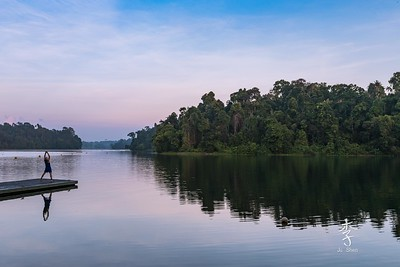 MacRitchie Reservoir - morning rays