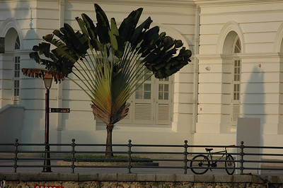 Tree and bicycle outside Asian Civilizations Museum, Singapore.