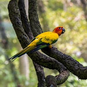 Singapore Macaw 4