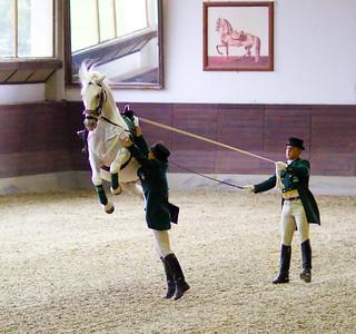 Lippizaner horse