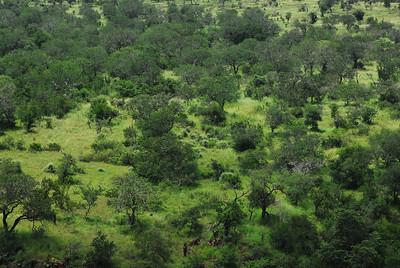 Landscape, Mkuze Falls private game reserve, Kwa-Zulu Natal, South Africa.
