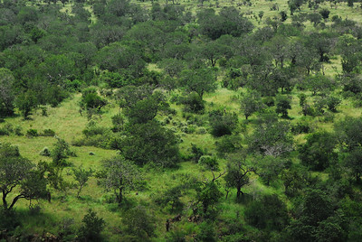 Landscape, Mkuze Falls private game reserve, Kwa-Zulu Natal, South Africa.