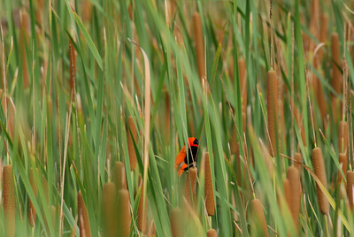 Bird in Mkuze Falls private game reserve, Kwa-Zulu Natal, South Africa.