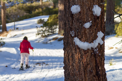 Smiley face on tree trunk with skier in background - USA - California - Lake Arrowhead
