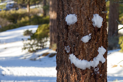 Smiley face made up of snow on tree trunk - USA - California - Lake Arrowhead
