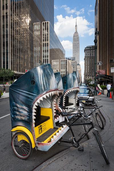 NYC Shark Week