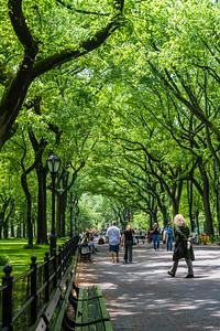 People walking in park - USA - New York State - New York
