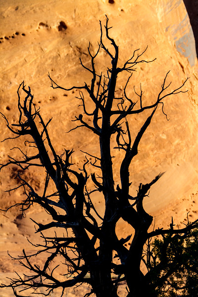 Silhouette of bare tree - USA - Utah
