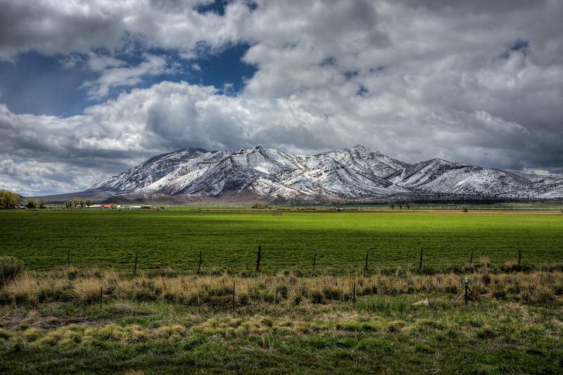 Grass to Snow