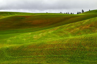 The Beginning Of The Palouse, Washington, USA