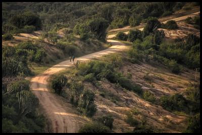 A walk through Queen Elizabeth National Park, Uganda - HDR.