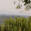 Cactus, Mweya Lodge, Uganda.
