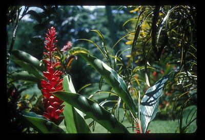 Plants, Espiritu Santo Island, Vanuatu.