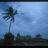 Ruin of American World War Two Quonset hut, Espiritu Santo Island, Vanuatu.