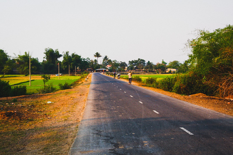 Peaceful Road Cutting Through Rice Fields
