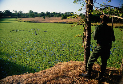 Isaac and hippos, South Luangwa Park, Zambia.