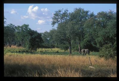 Elephant, South Luangwa Park, Zambia.