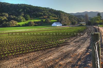 white-barn-4328_29_30
