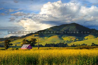Country, Barns, Wildflowers