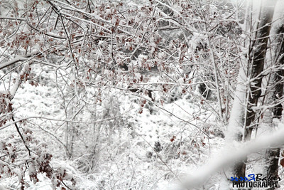 2012 Snow Dec 26th_0003