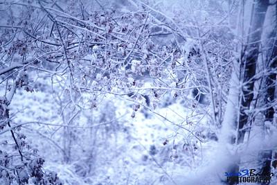 2012 Snow Dec 26th_0001