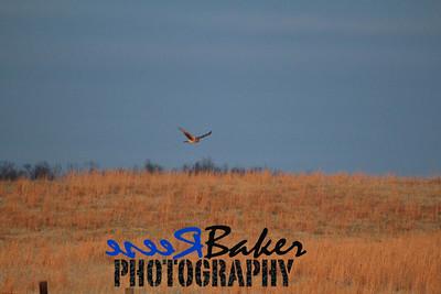 2013 Hawks_0002
