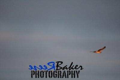 2013 Hawks_0006