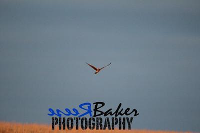 2013 Hawks_0003