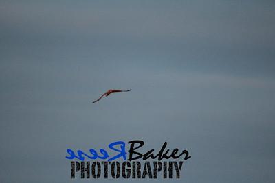 2013 Hawks_0004