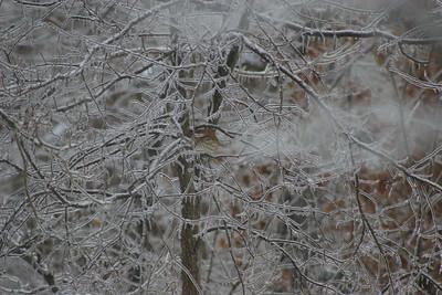 2014 Snow_0043