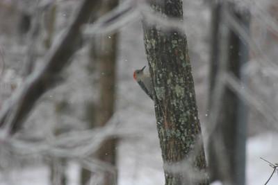 2014 Snow_0056