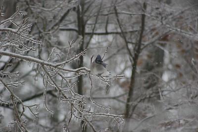 2014 Snow_0057