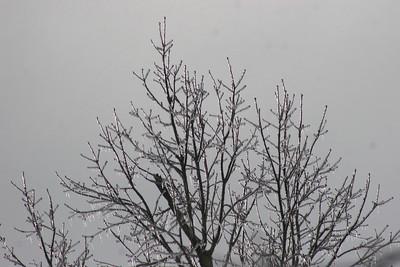 2014 Snow_0040