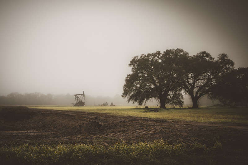 Foggy Cajun morning