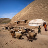 Drought decreased the livestock price by 70% in Badghis