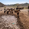 Drought decreased the livestock price by 70% in Badghis and water sources have dried up