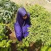 Growing vegetables and bright future in Nigeria