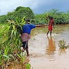 Flooding due to the heavy rains has damaged crops in many farming communities of central and southern Somalia, including around Baidoa. The risk is high near the Juba and Shabelle rivers. <br /> <br /> There have been heavy and frequent rains in Somalia in April.<br /> <br /> Picture taken April 2018 <br /> <br /> Photo: NRC