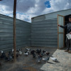 """We used to have a much more numbers of pigeons back in Syria, it was our only job for making money"" Eyad Says.<br /> <br /> Photo: NRC/Hussein Amri"