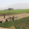 Agricultural fields and workers on the way from Amran city to Houth. <br /> <br /> Photo: NRC/Alvhild Stromme