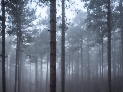 December 13, 2014. Into the fog