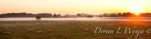 Hay field_036