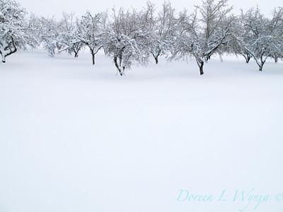 Filbert Orchard_040J